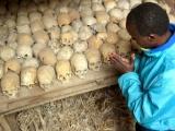 Génocide rwandais : Rapport contre Rapport
