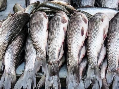 Production halieutique et aquacole : 11 milliards pour créer 3000 entreprises et 5000 emplois